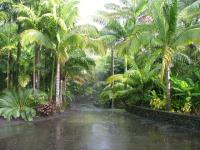 Tropical Landscape - Emphasis on Palm Trees, Cycads and ...